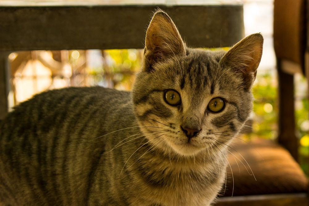 Photo in Animal #kitten #kitty #look