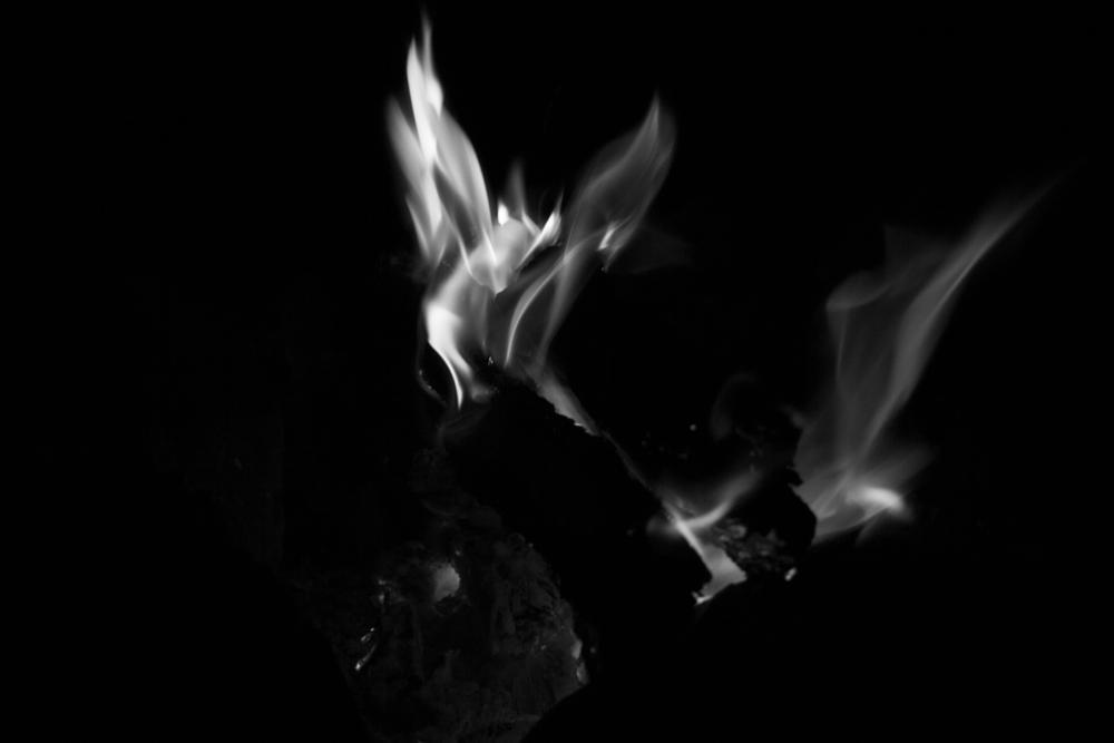 Photo in Fine Art #anima #fuego #corazón #vitalidad #phoenix #animal #lima #hongos #hoguera #fogata