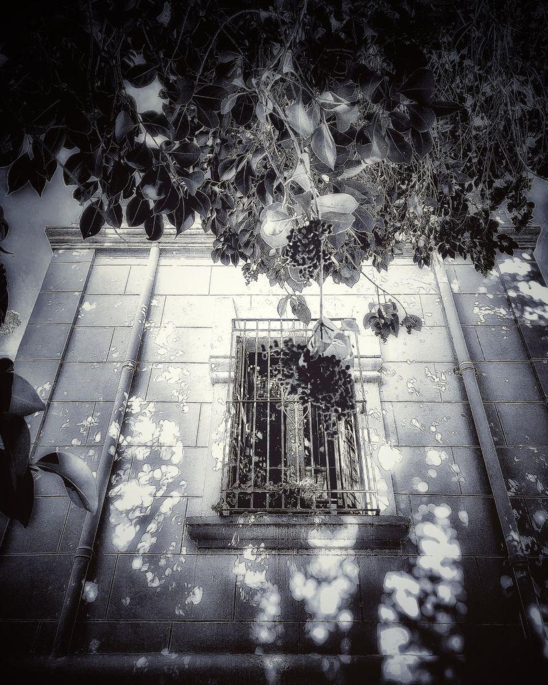 Photo in Random #youpic #window #love #trees #inspiration