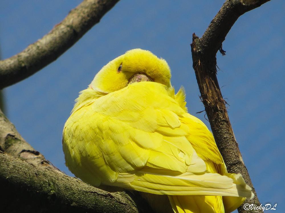 Photo in Animal #parrot #papegaai #gaiazoo