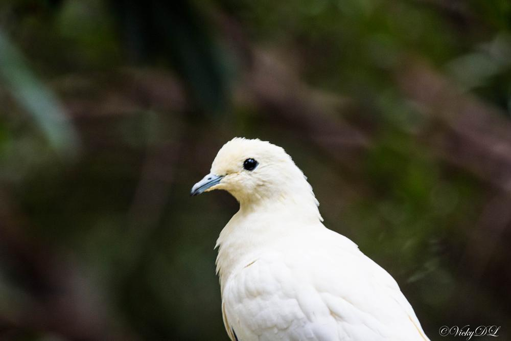 Photo in Animal #white #dove #duif