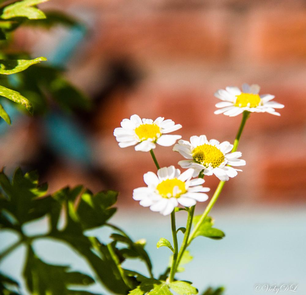 Photo in Nature #flowers