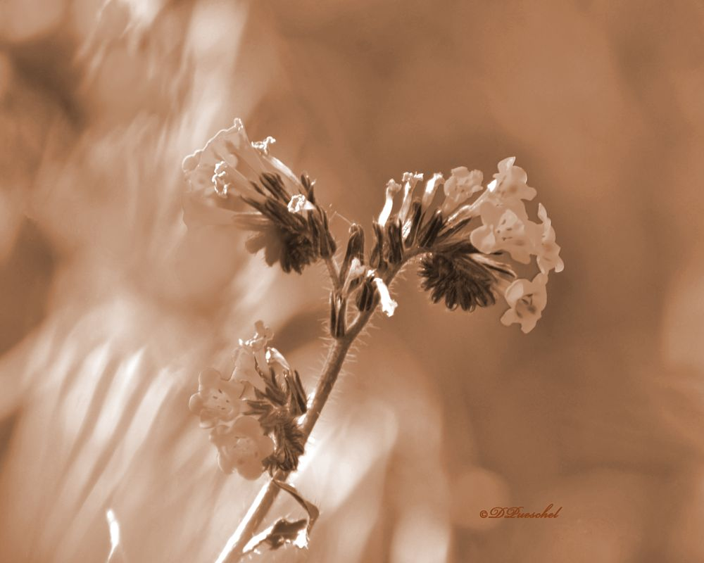 Photo in Rural #old fashioned #shadowy texture #stormy weather #wild flowers #digitally enhanced #flowers