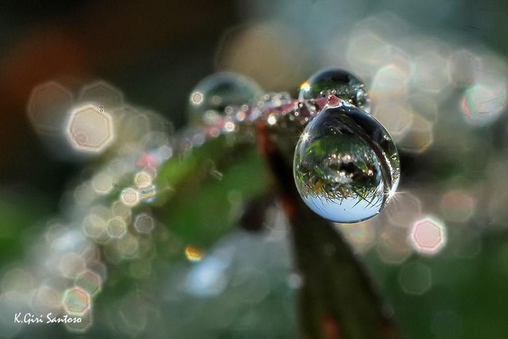 Photo in Macro #potrait #macro #art #abstract #nature #dew #water
