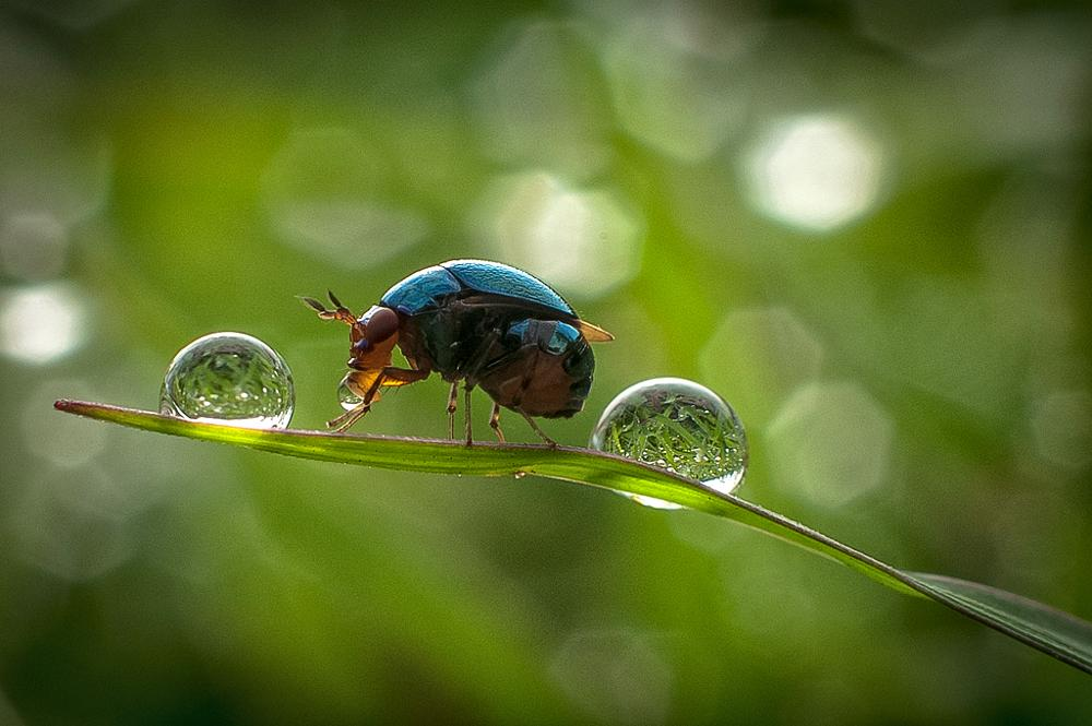 Photo in Nature #nature macro closeup insect