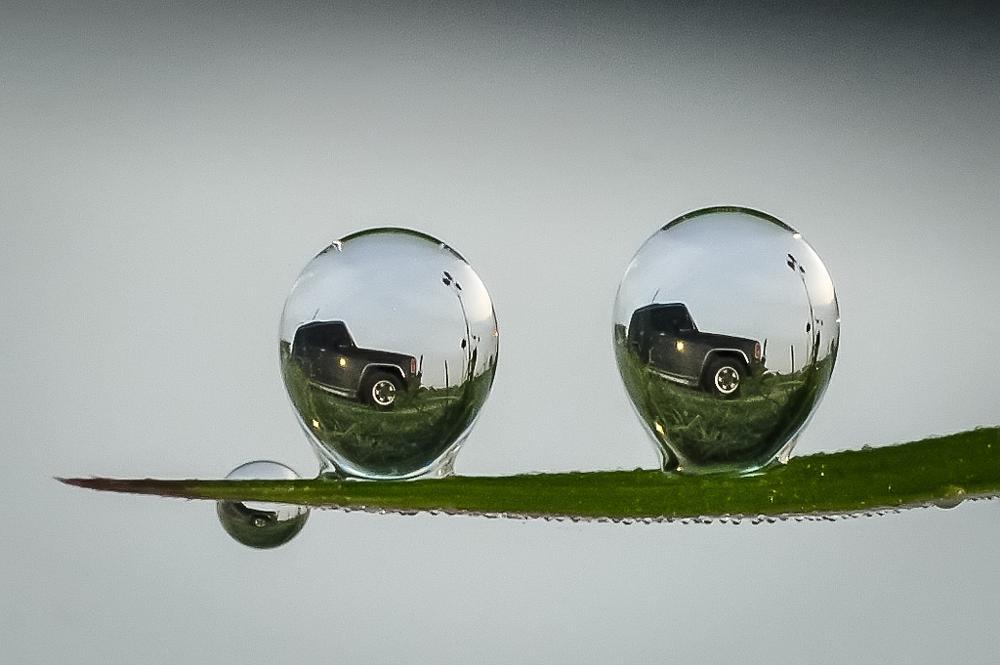 Photo in Nature #macro nature refleksi dew's