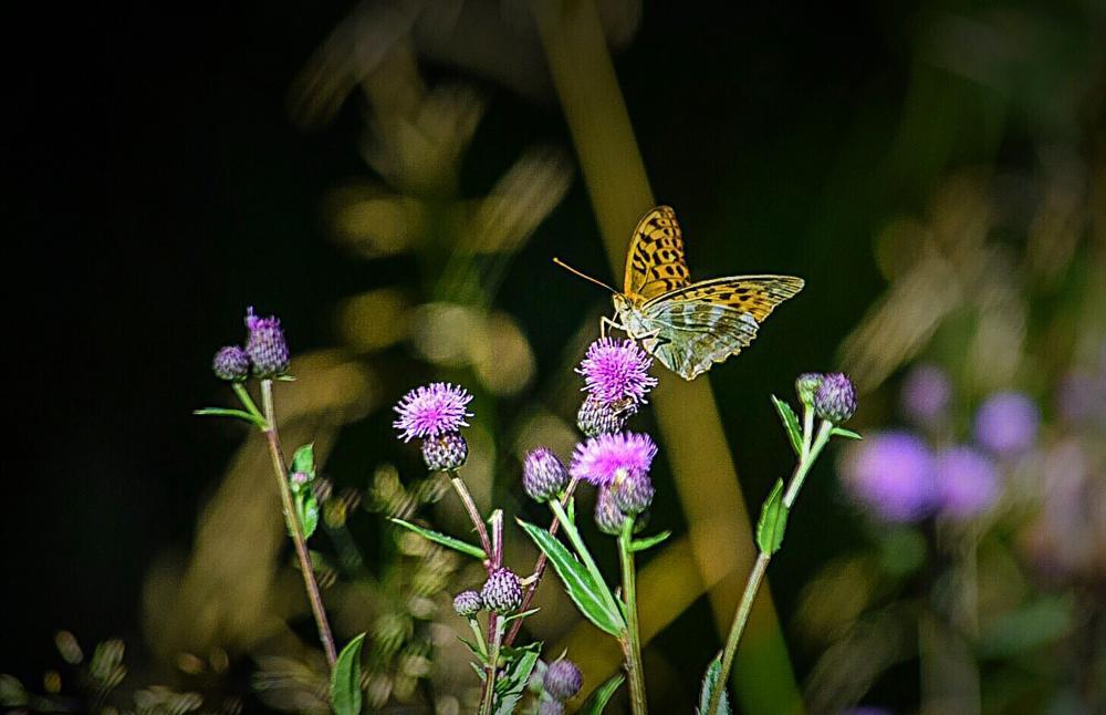 Photo in Animal #butterfly #animal #fjäril