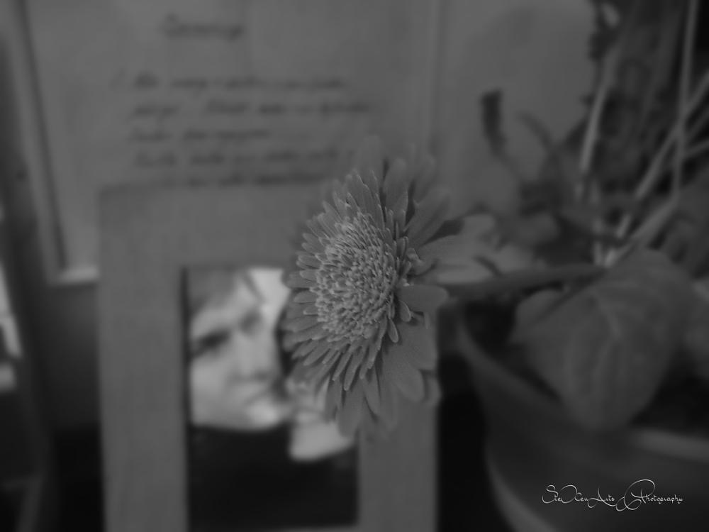 Photo in Black and White #promise #love #black&white #sadness #missing #gerbera