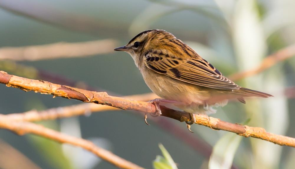 Photo in Nature #birds #birding #nature