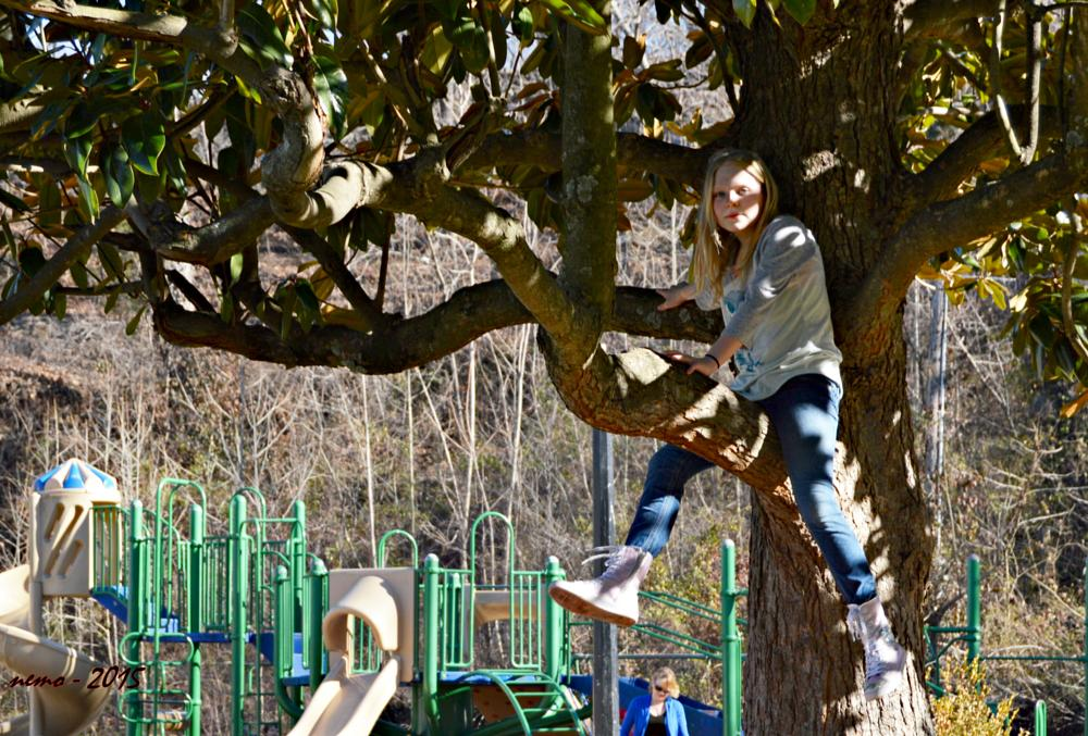 Photo in People #children #tree #climbing #play #park #missouri #outdoor #streetphotography #people