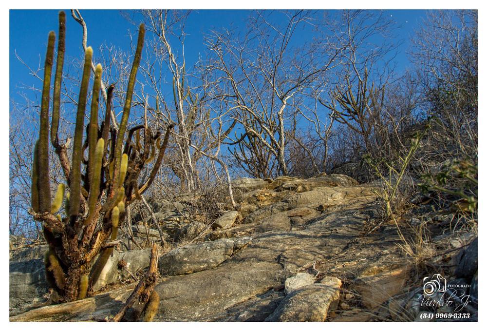 Photo in Nature #trilha #serra do feiticeiro #serra #feiticeiro #sierra #witch #natureza #nature