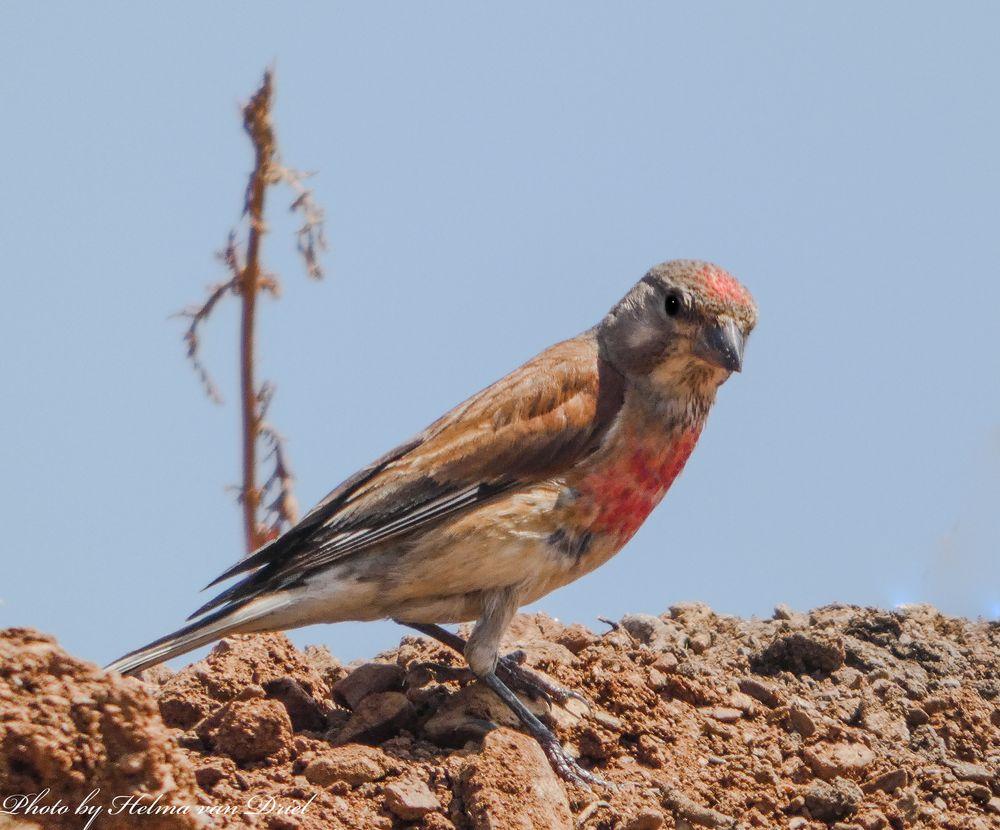 Photo in Animal #birds nature spain wildlife