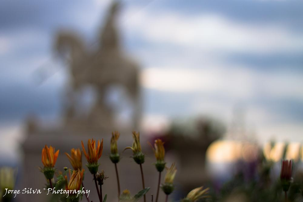 Photo in Urban #bokeh #flowers #statue