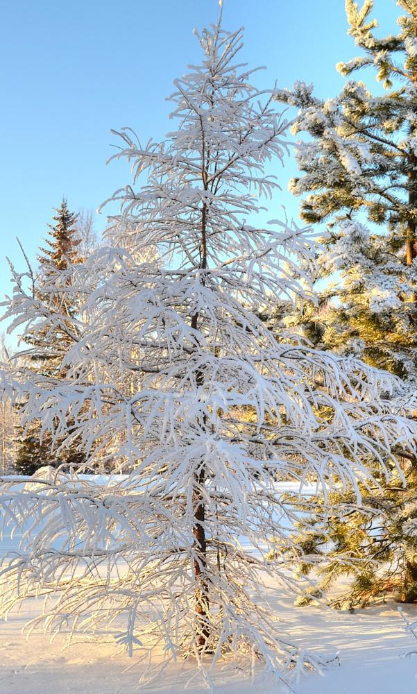 Photo in Nude #alaska #winter #fairbanks