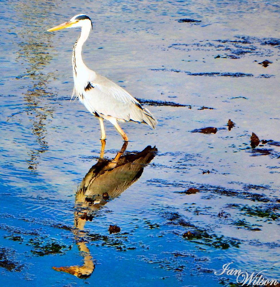 Photo in Animal #wildlife #nature #birds #animals #water #river #ocean
