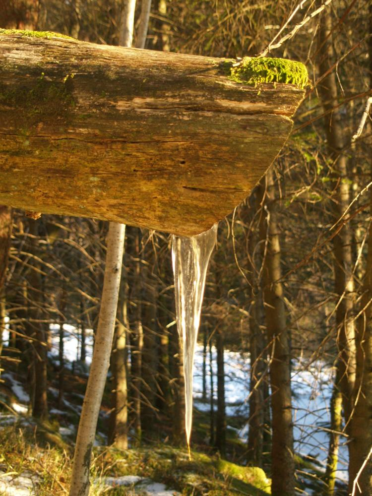 Photo in Nature #forest #ice #icycle #norway #winter #cold #frozen #bergen