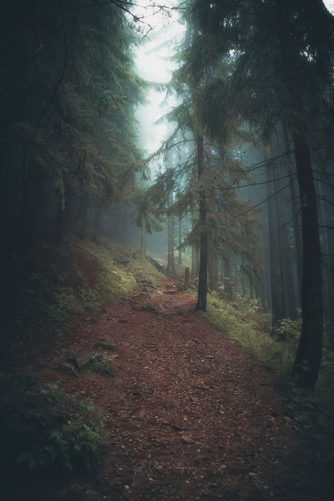 Photo in Nature #fog #foggy #mist #forest #pic #trees #summer #hike #hiking #photography #instagram #green #nature #travel
