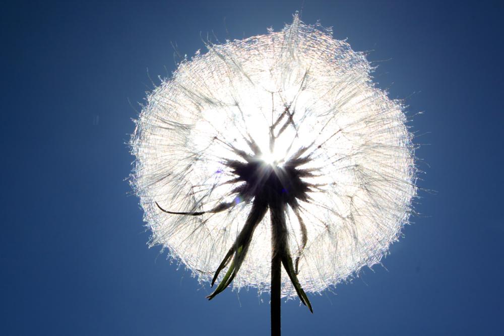 Photo in Macro #dandelion #blow #me #away