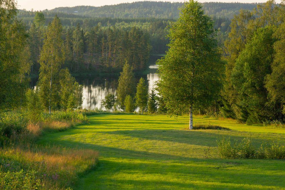 Photo in Landscape #birch #tree #landscape #water
