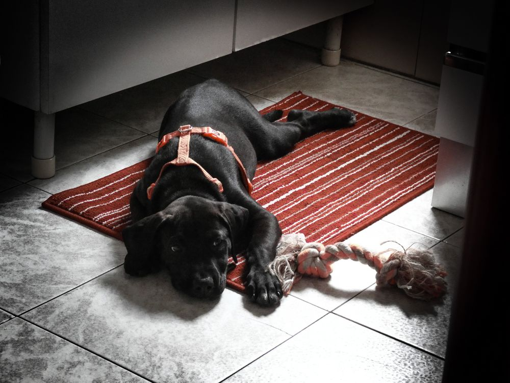 Photo in Random #baddog #dog #love #baby