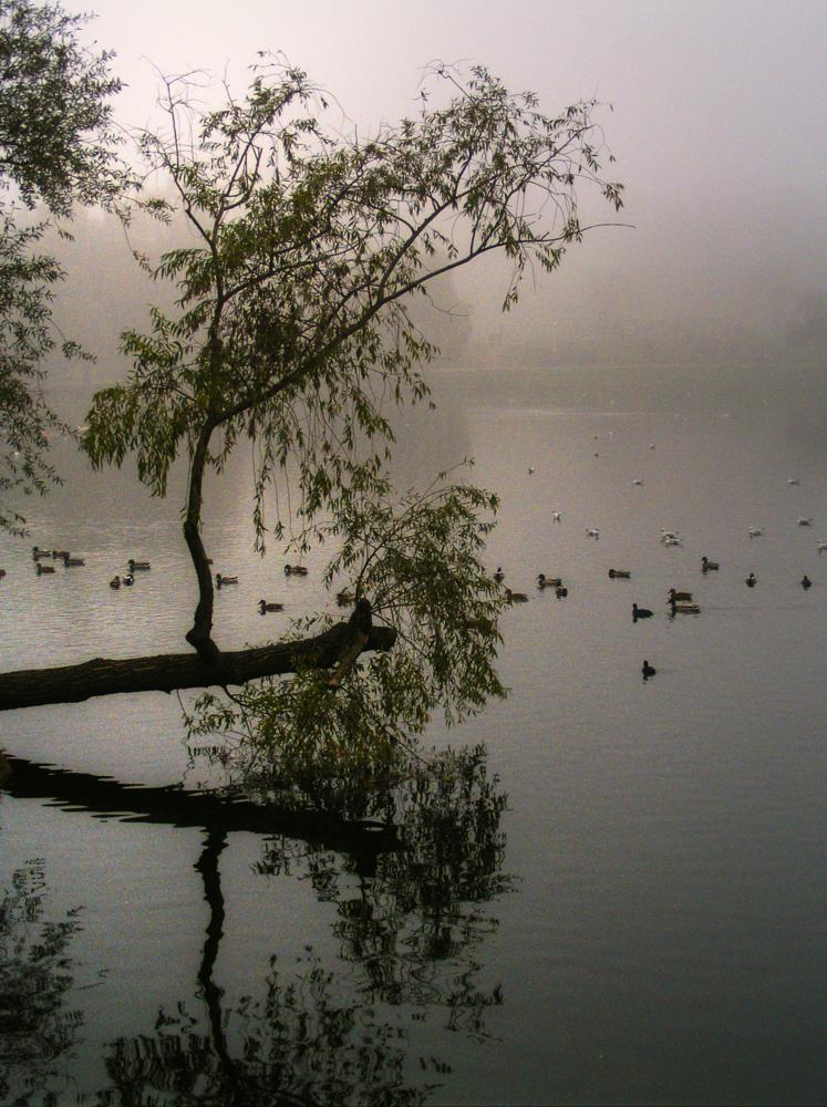 Photo in Nature #lake #birds #fog