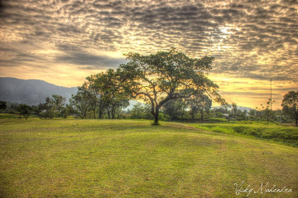 Photo in Landscape #sunset #landscape #tree #cloud