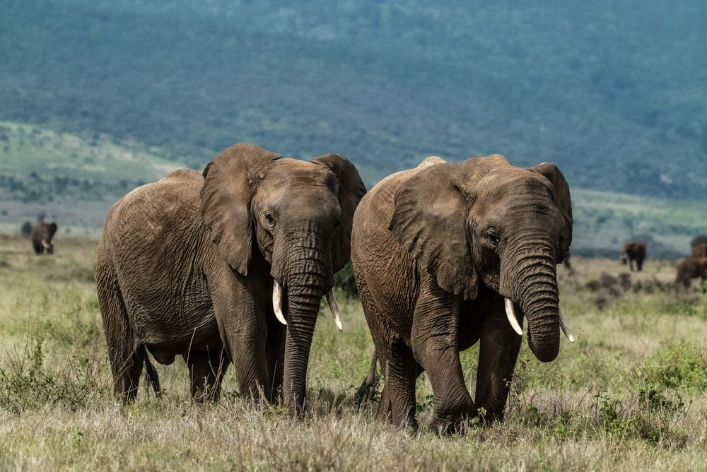 Photo in Animal #landscape #colors #elephant #nature