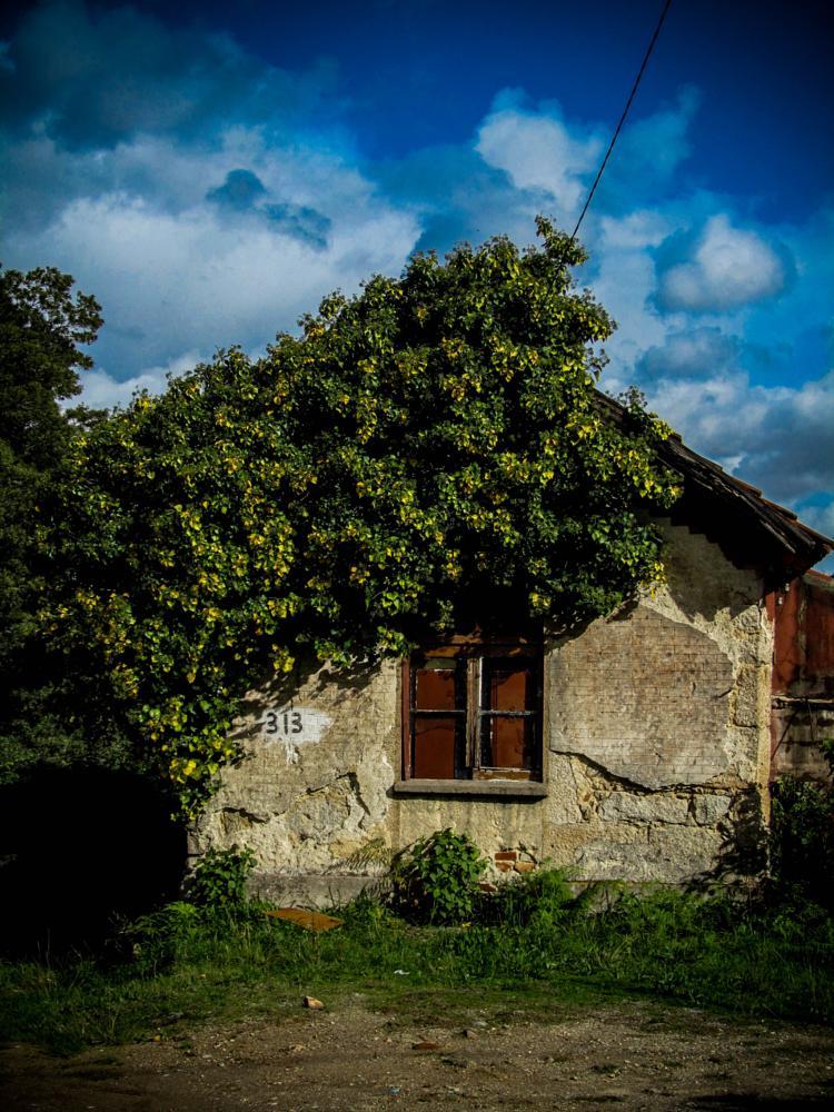 Photo in Random #house #blue #abandoned