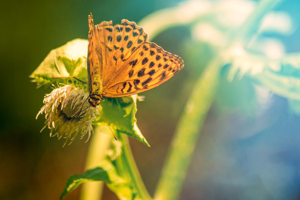 Photo in Macro #butterfly #flower #insect