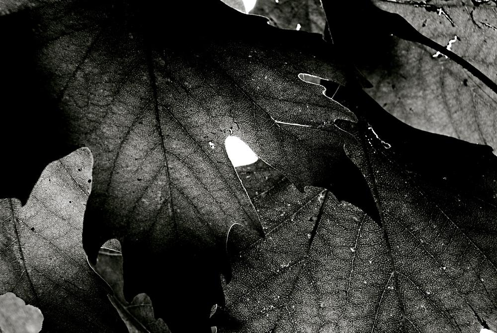 Photo in Nature #nature #leaves #winter