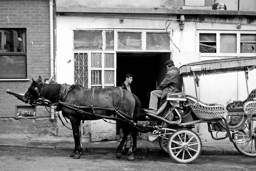Photo in Black and White #black & white #monochrome #horses #büyükada #πρίγκηπος