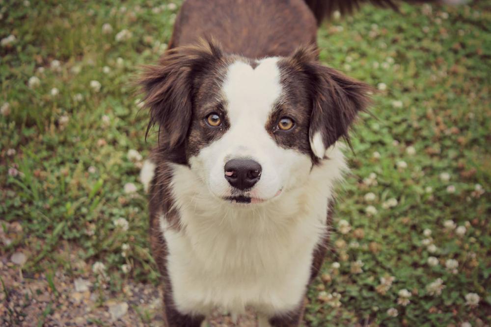 Photo in Animal #dog #farm