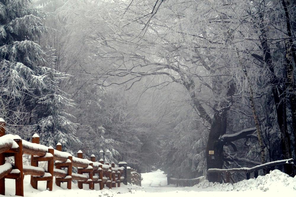 Photo in Landscape #śnieg #droga