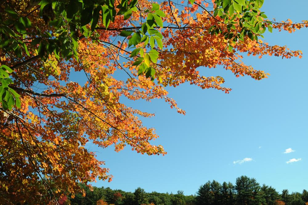 Photo in Landscape #amherst #new hampshire #fall #colors #leaves #leaf peeping