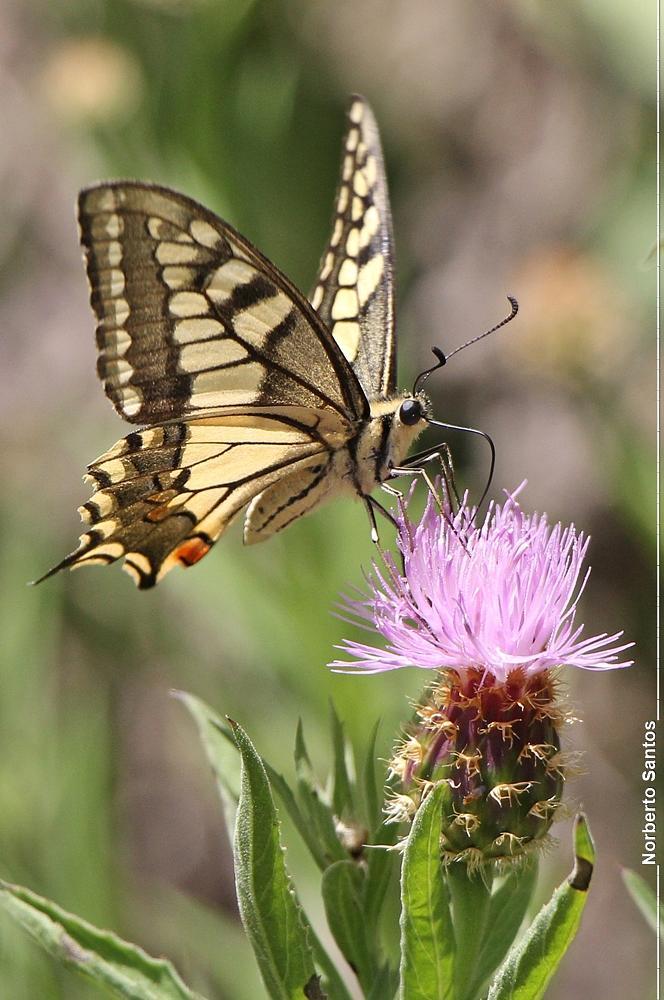 Photo in Animal #borboleta #animais #natureza #plantas #insectos