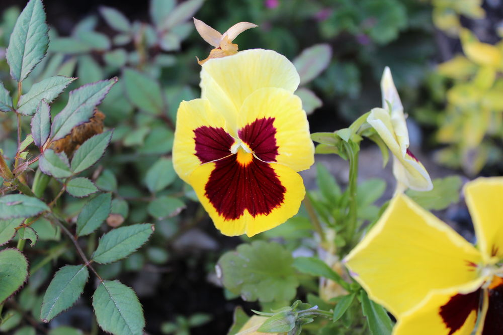 Photo in Random #flower #yellow #beautiful