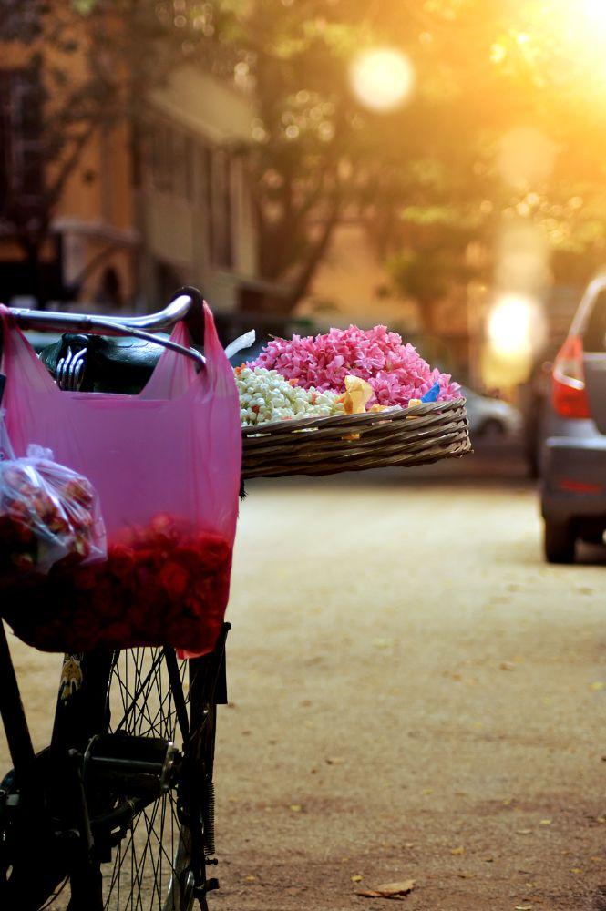 Photo in Street Photography #flower #sunset #street