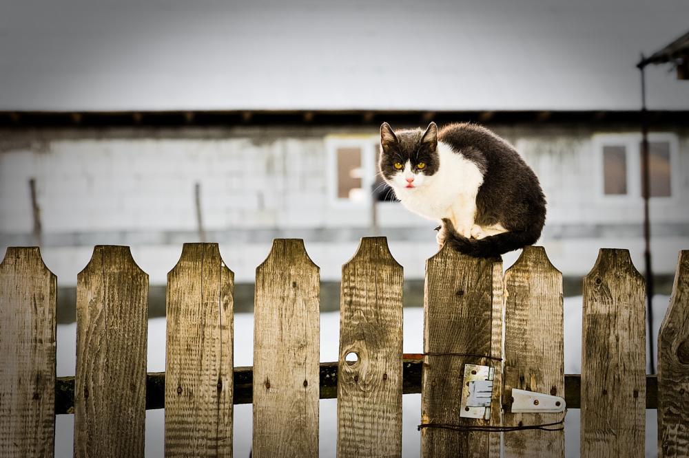 Photo in Animal #cat #animal #nikon #d700