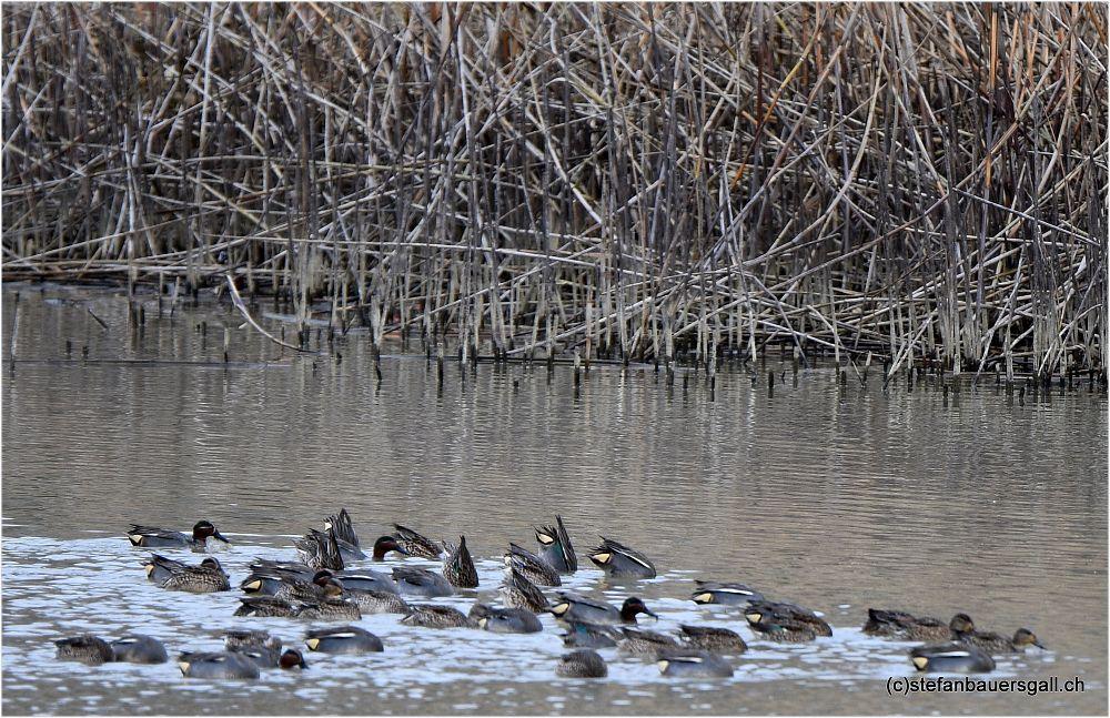 Photo in Animal #ducks #birds