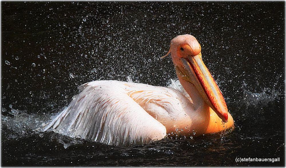 Photo in Animal #pelikan #praha #zoo