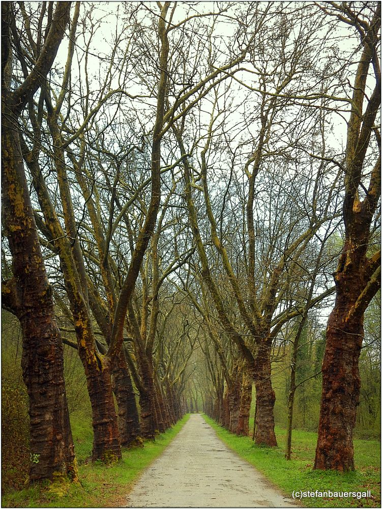 Photo in Landscape #trees #allee