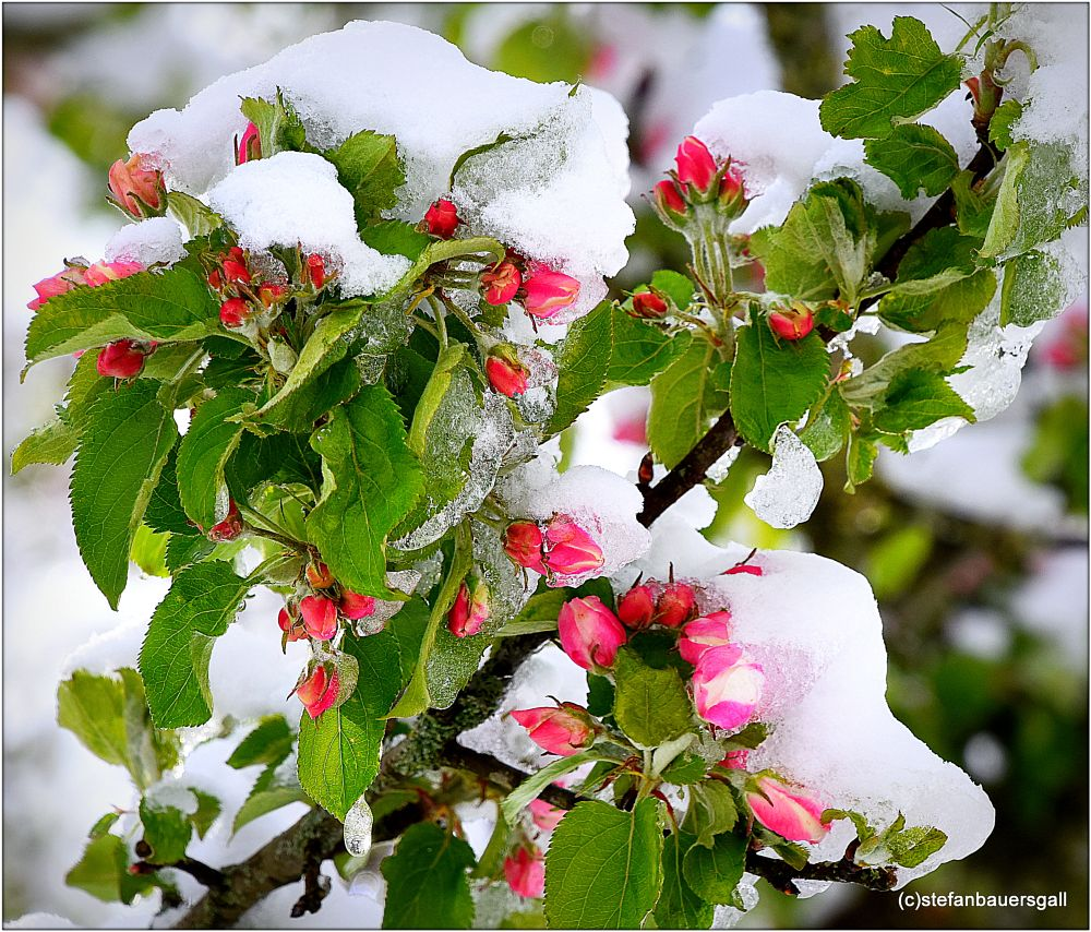 Photo in Nature #fleur #blossom