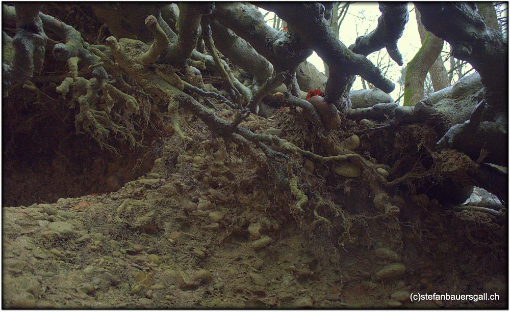 Photo in Nature #tree #roots #underworld
