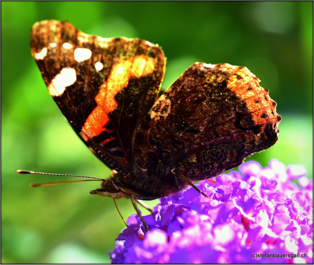 Photo in Animal #butterfly #summer
