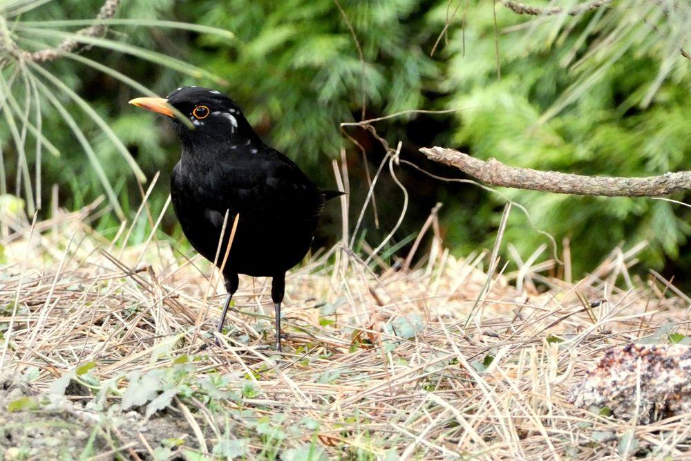 Photo in Animal #animal animals bird birds