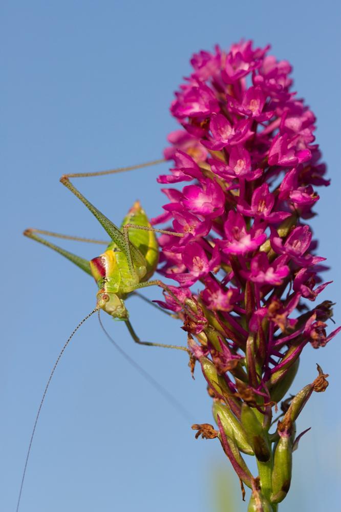 Photo in Macro #grasshopper #mnbogomaz.com #bogomaz