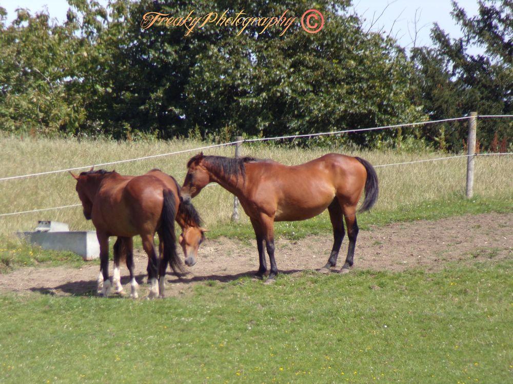 Photo in Animal #horses #animal #wildlife #sunshine #weather #landscape