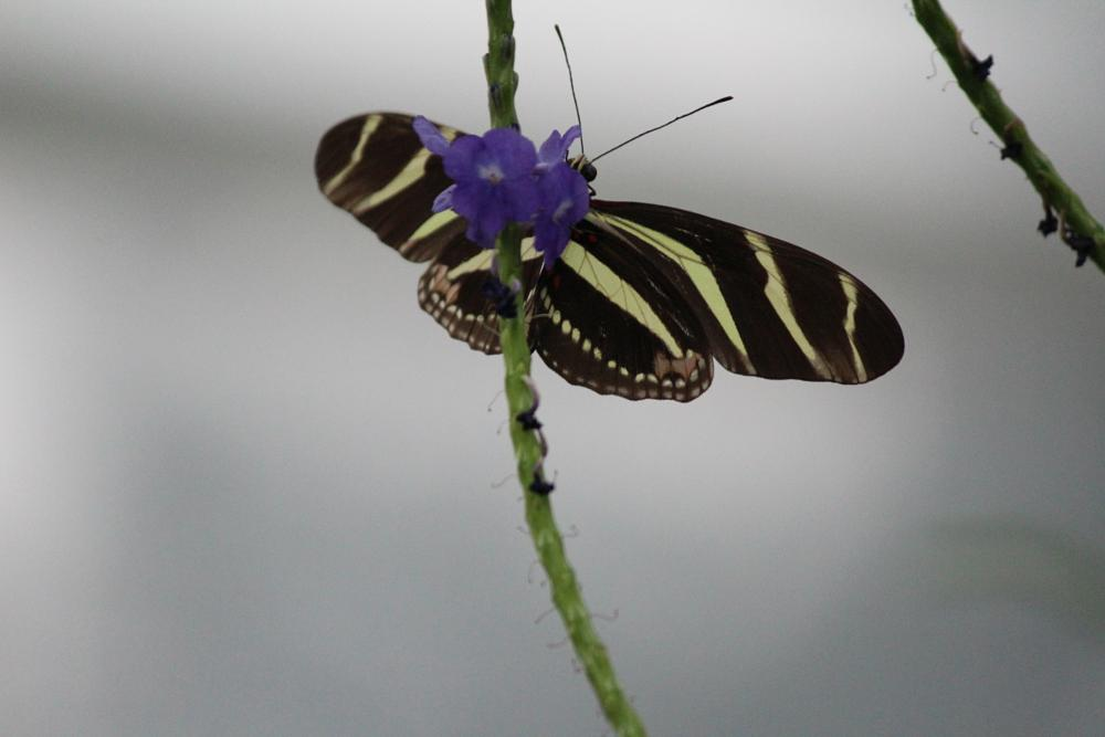 Photo in Nature #butterfly and flower #butterfly in flight