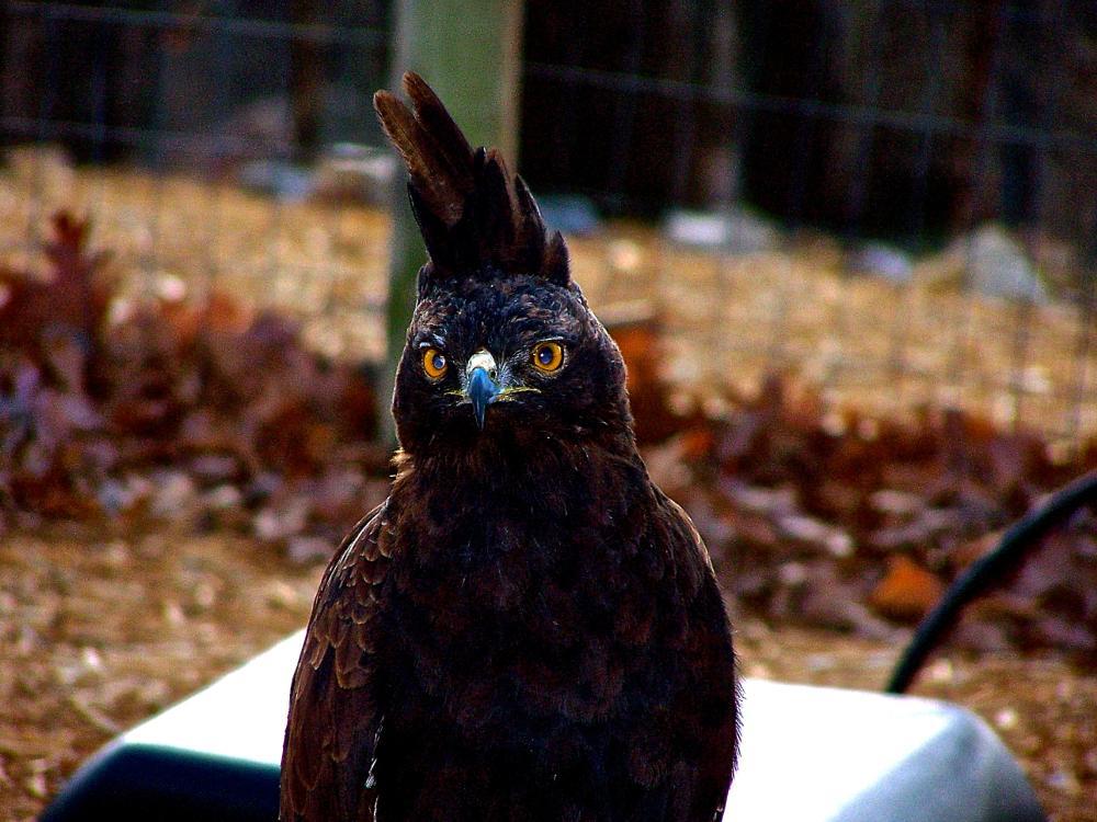 Photo in Animal #bird of prey #eagle #raptor
