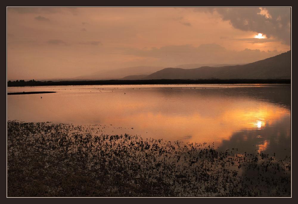 Photo in Landscape #agmon a-hula #like #sunset #nature #israel